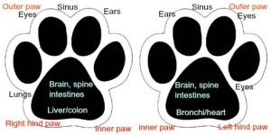 dogs essential oils both paws with points